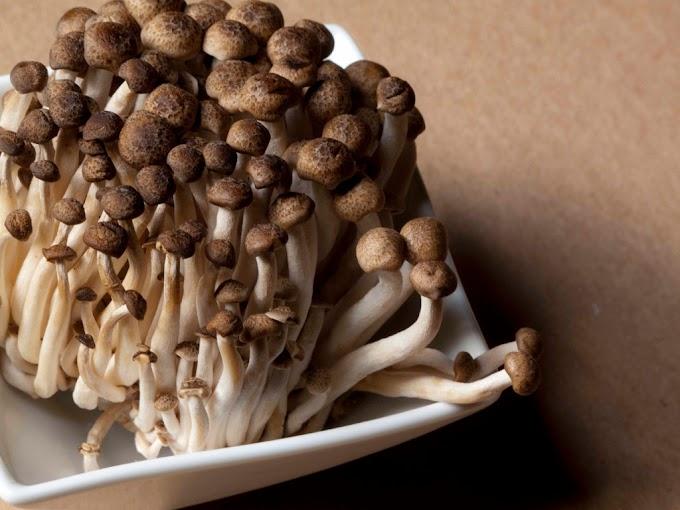 Shimeji mushroom cultivation | Mushroom farming | Organic mushroom cultivation