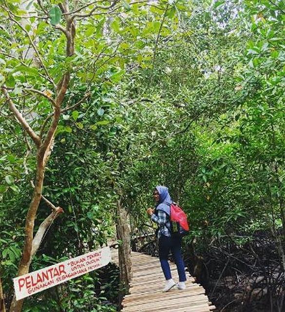 susur-hutan-mangrove