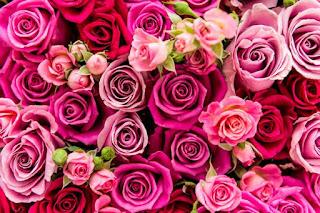 Flower Gifts Deals