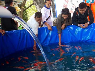 Membeli Ikan Koi Yang Sehat