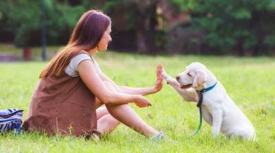 The Importance Of Dog Training