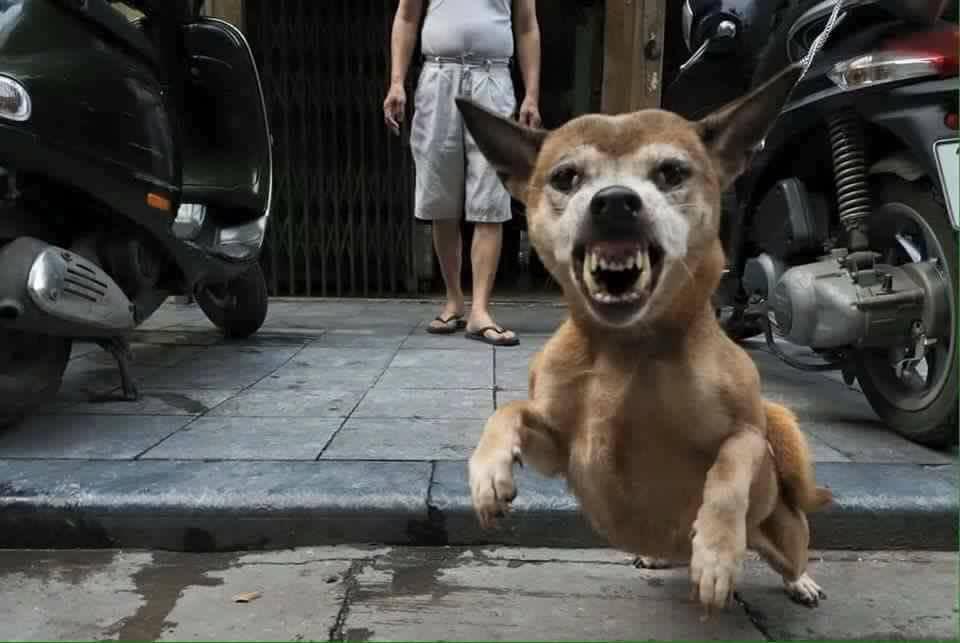 Đó là lần cuối cùng tôi chụp bức ảnh con chó này ..
