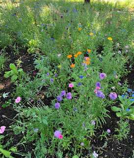 Lots of colorful and fairly thick wild flowers