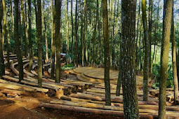 Mangunan Pine Forest of bantul