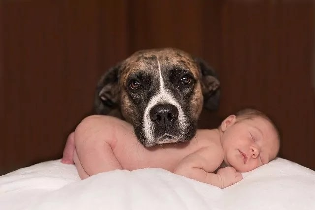 sleeping baby with loyal dog