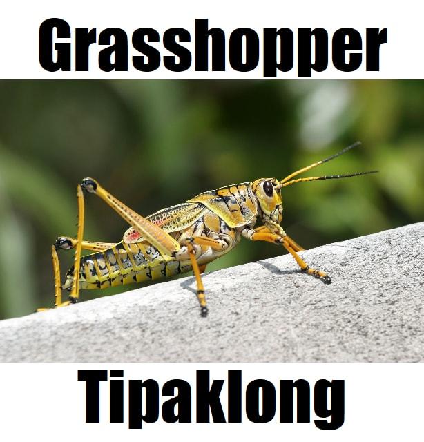 Grasshopper in Tagalog