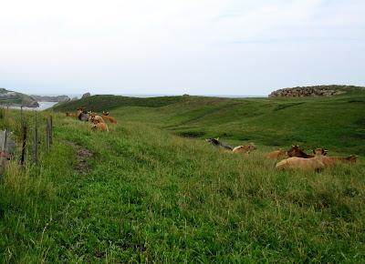 Prados con vacas