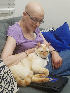 A flame-point Siamese cat (Whisper) snuggles up to Linda (bald woman in purple shirt). He's also settled onto a warm, closed laptop computer.
