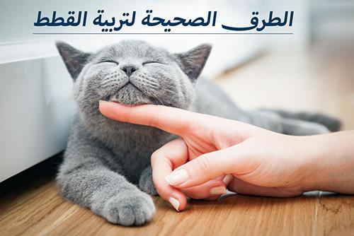 الطرق الصحيحة لتربية القطط