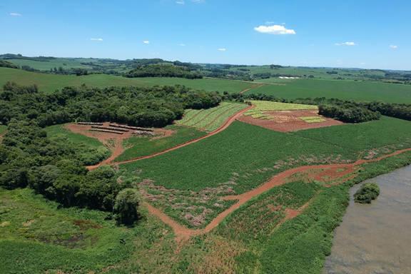 Copel conclui plantio de 75 mil mudas em área de preservação de hidrelétrica