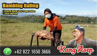 Catering Kambing Guling Garut, kambing guling garut, catering kambing guling, guling kambing garut, kambing guling,