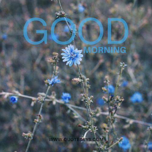 Good morning blue flower