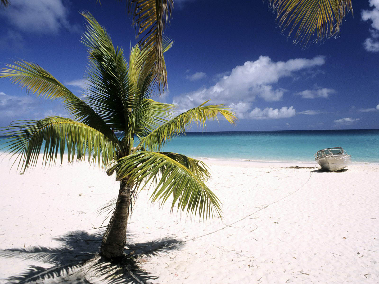 wallpapers: Palm Trees Wallpapers