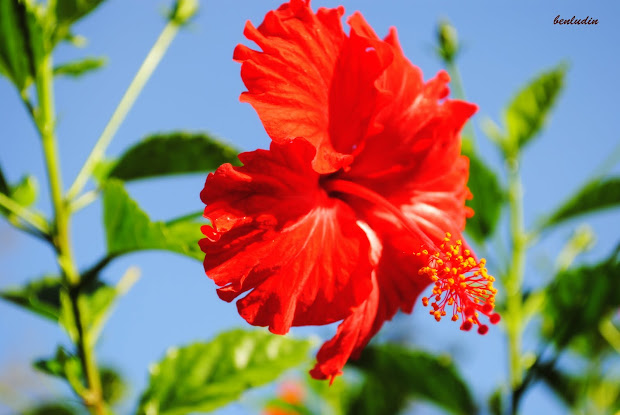 Unduh 780 Gambar Bunga Raya Bergerak Paling Keren