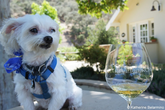 Riverbench Dog Friendly Santa Maria Wine Tasting Central Coast