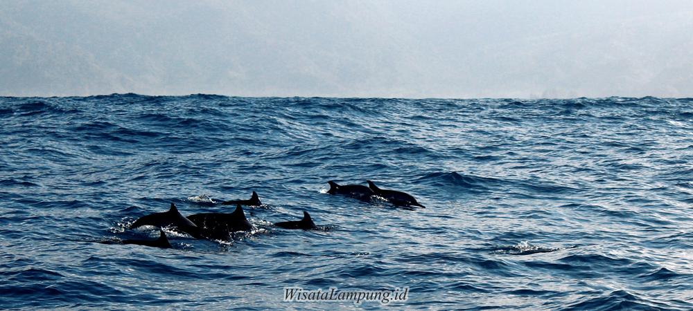 Wisata Teluk Kiluan Lampung Selatan Mengarungi Lautan Demi
