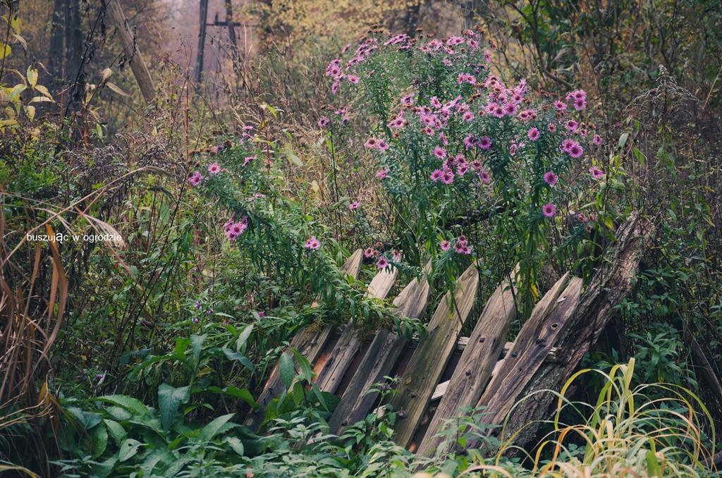 opuszczony ogród