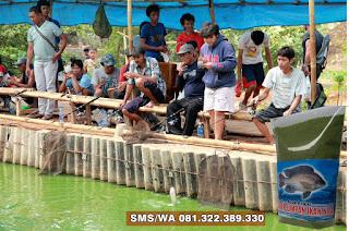 Umpan Ikan Nila Khusus Kilo Gebrus