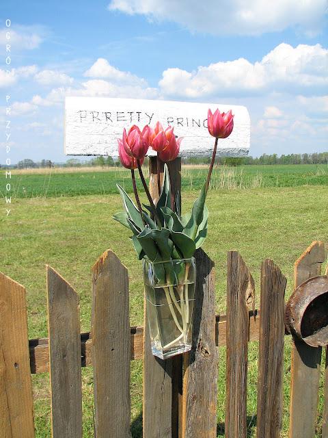 Żuławski Tulipan, ogród przydomowy
