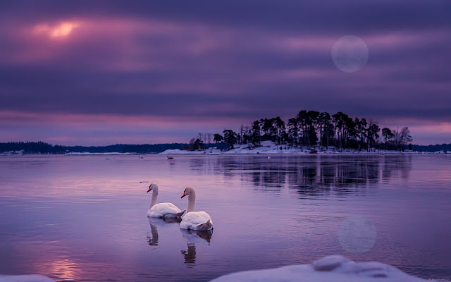 lago, natura, animali,