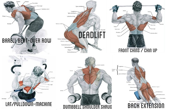 How to Exercise to Build Big Back Muscles