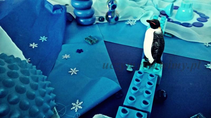 Pingwin - kręgi polarne
