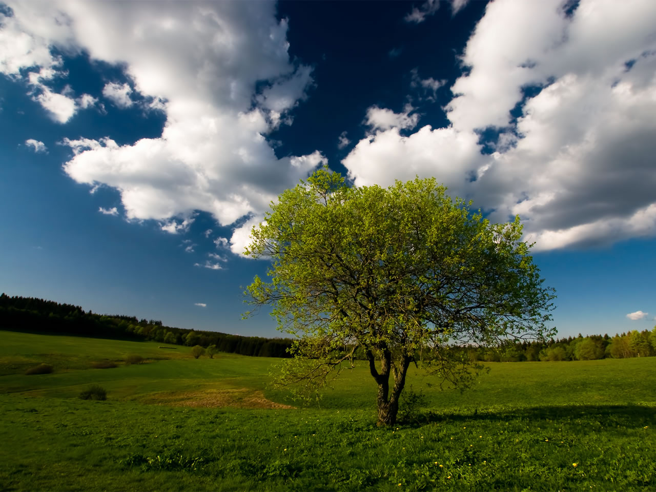Nature Wallpapers Free Photos Natural Beauty Wall Papers