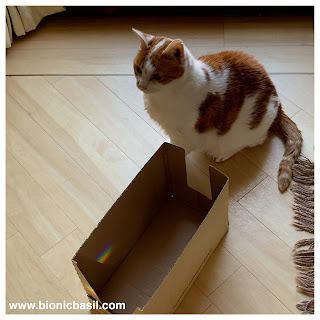 BBHQ BOX INSPECTORS @BionicBasil® The Sunday Selfies