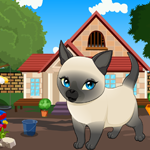 Games4King Tonkinese Cat …
