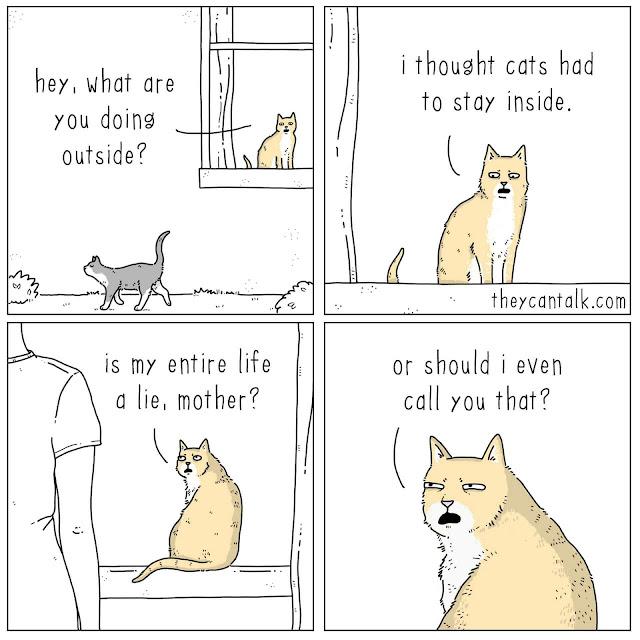 Memes for cat moms