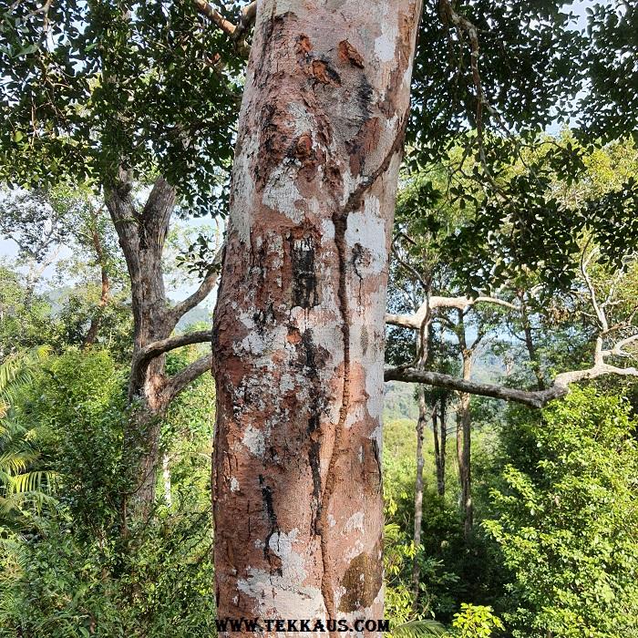 Black Termite In The Forest The Habitat
