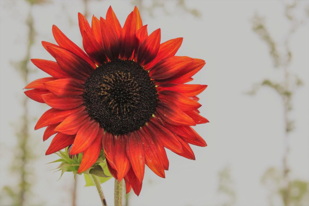 gardening-garden-mississippi-garden-flower-farmer-athomewithjemma