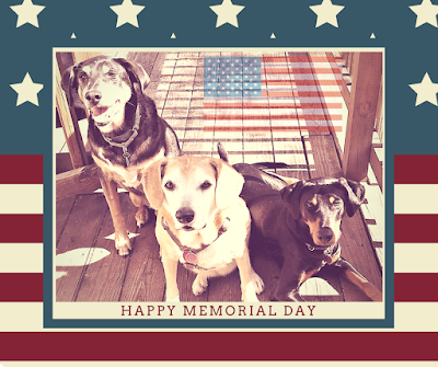rescue dogs celebrating memorial day