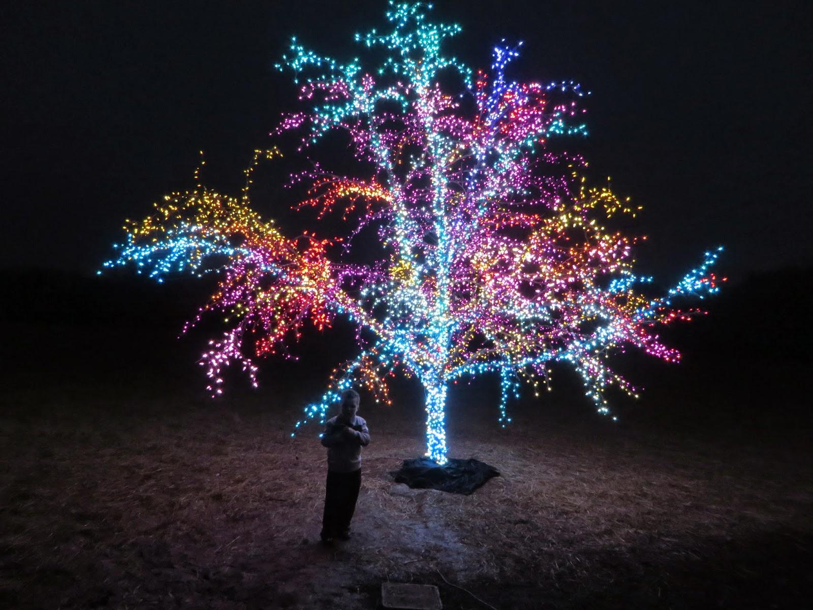 Longview Lake Christmas Lights