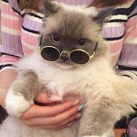 Fotos de gatos divertidas