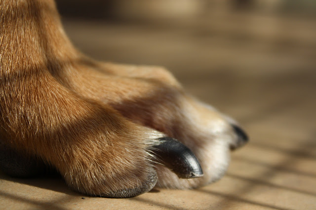 Itchy Skin Dog Supplements