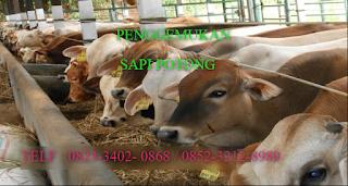 AGEN NASA DI Idano Gawo, Nias - TELF 082334020868