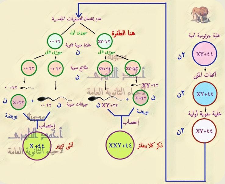 تصنيف الطفرات تبعاً لنوعها - الطفرات الصبغية - التغير فى العدد - النقص فى عدد الصبغيات - تيرنر- الثالث الثانوى