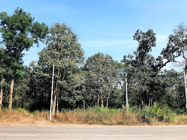 Srisailam road Jungle view-one day trip to srisailam from hyderabad