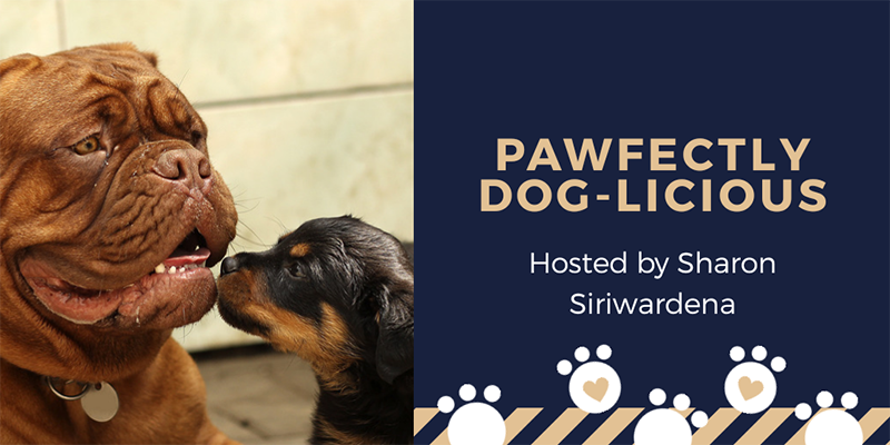 Pawfectly Dog-licious