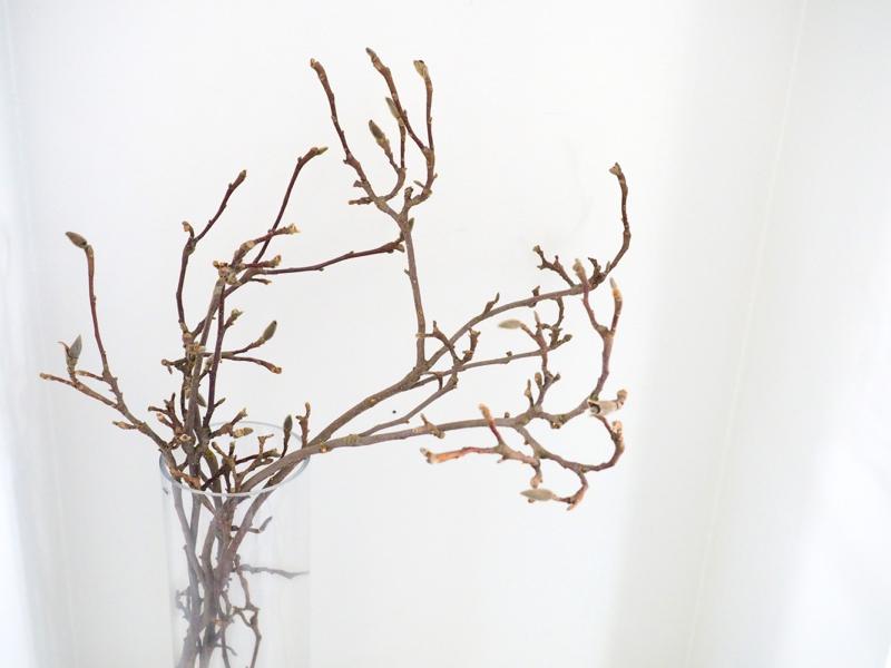mangnolian oksa