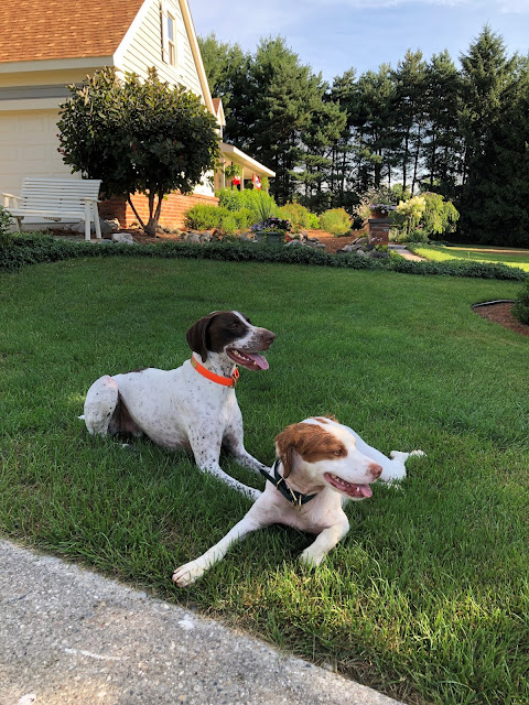Bowie & Coda on the front lawn