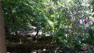 Το ΣτΕ δικαιώνει τους πολίτες για το Ρέμα της Πικροδάφνης