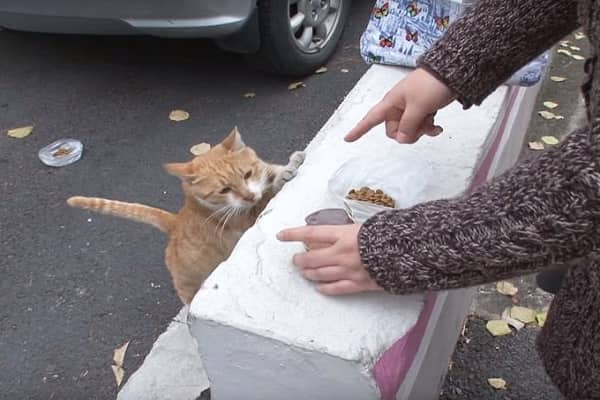 The homeless cat just accepted food in bags,  the woman followed her and found a secret.