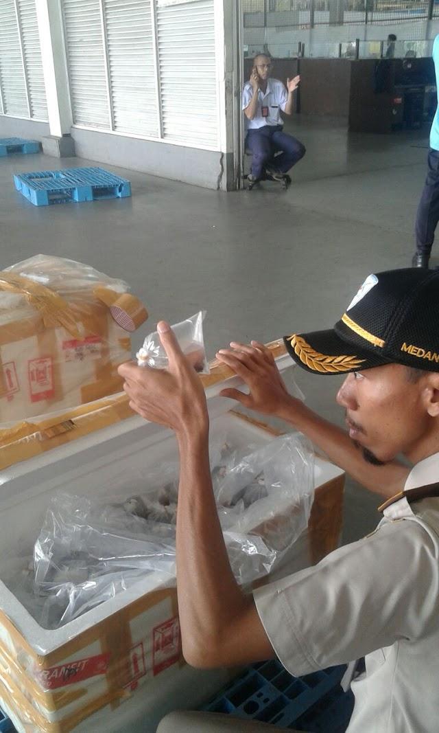 April 2021, Balai KIPM Medan I Bukukan Nilai Ekspor US$3.332.746
