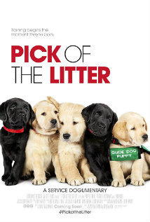Pick of the Litter 2018 - Legendado