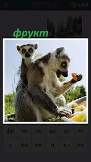 сидит сурикат с детенышем и в руках держит фрукт