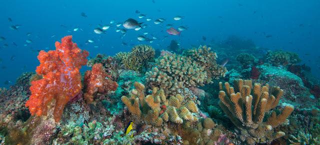 Los arrecifes de coral en las Fidji están amenazados por el calentamiento y el aumento de acidez de los océanos.Coral Reef Image Bank/Jayne Jenk