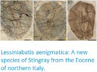https://sciencythoughts.blogspot.com/2019/10/lessiniabatis-aenigmatica-new-species.html
