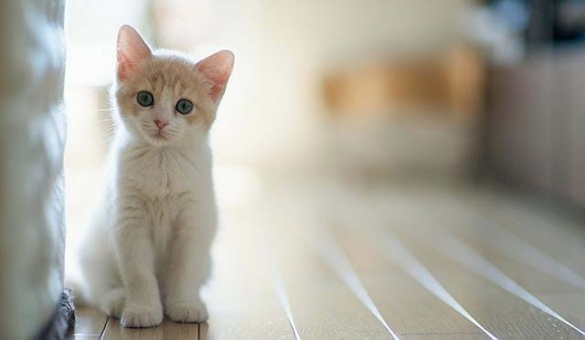 Berikut Alasan Kenapa Kucing menjadi Hewan yang Recomended untuk Dipelihara